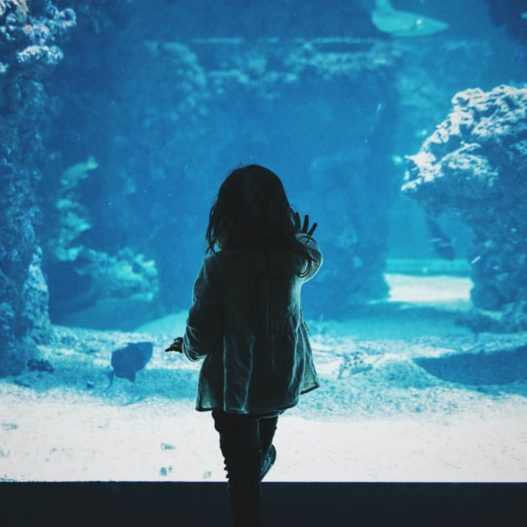 National_kids_aquarium.jpg