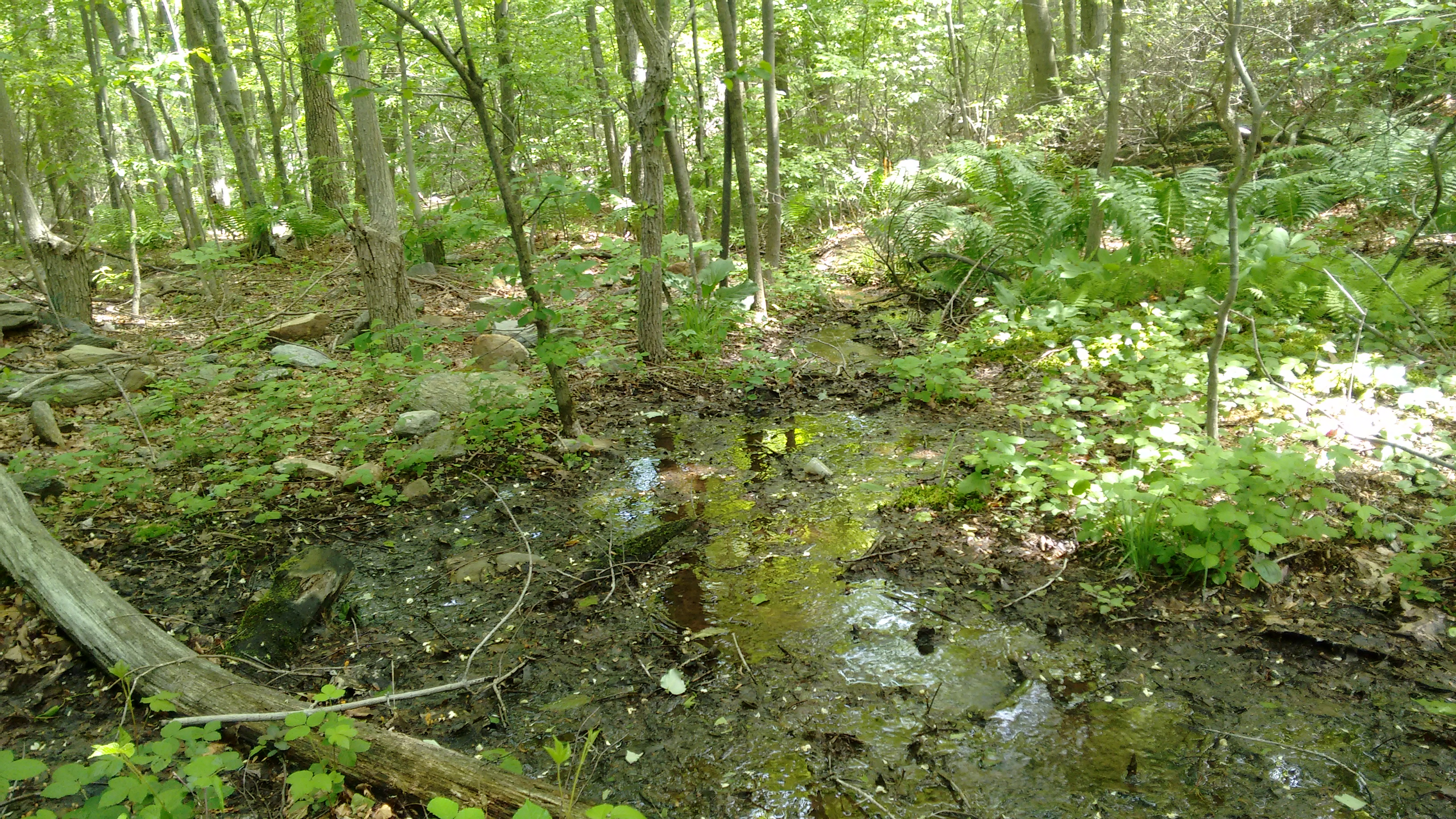 A stream surrounded by trees in the Frederick Municipal Forest