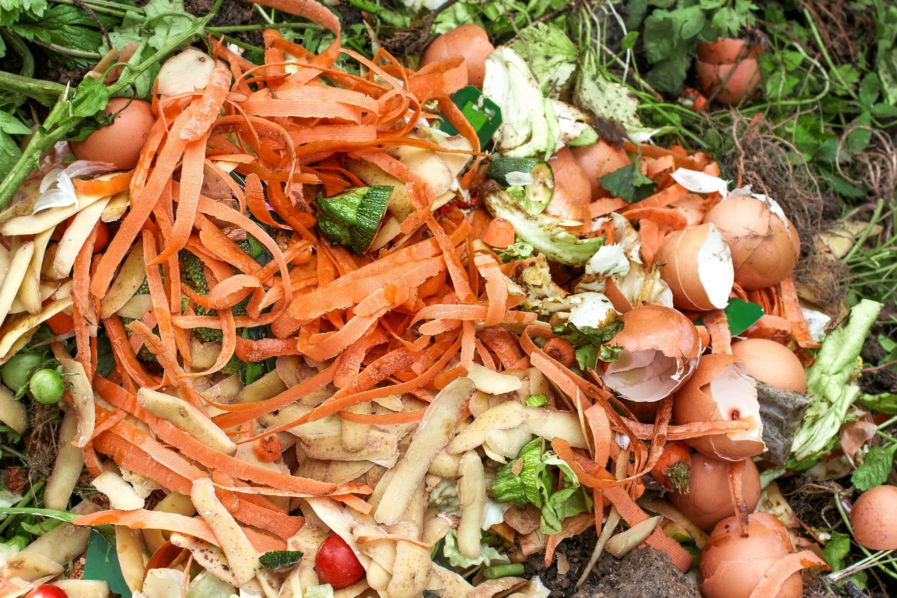 NJ_Food Waste Source: Canva