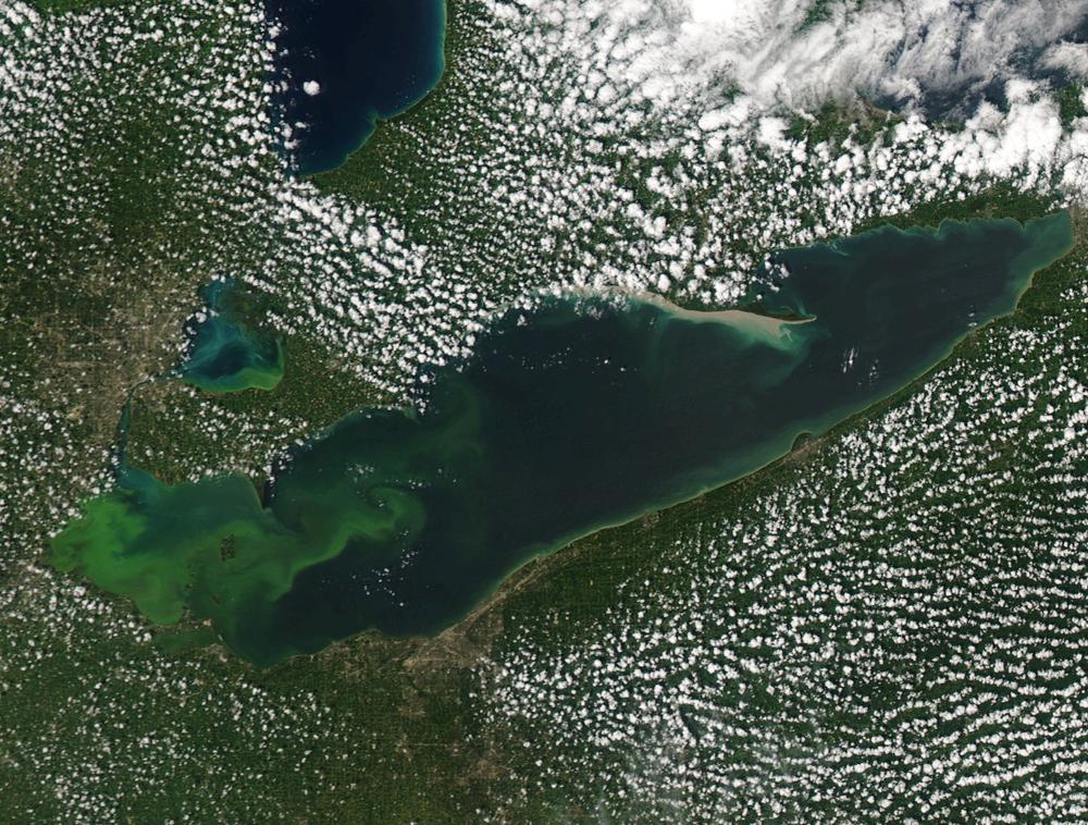 Lake Erie Algal Bloom - August 2015. Photo Credit: NOAA Great Lakes CoastWatch