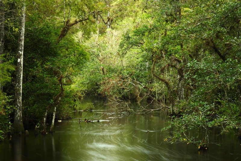 Preventing Oil Exploration In Big Cypress Clean Water Action