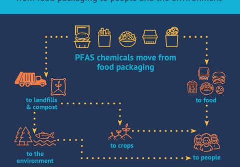 How PFAS moves from packaging to people and environment.