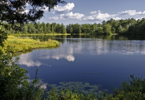 NJ_Lake_Pine Barrens