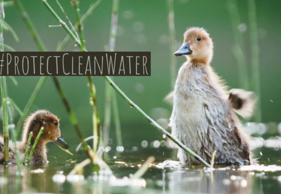 Wildlife 1 -- Clean Water Week.jpg