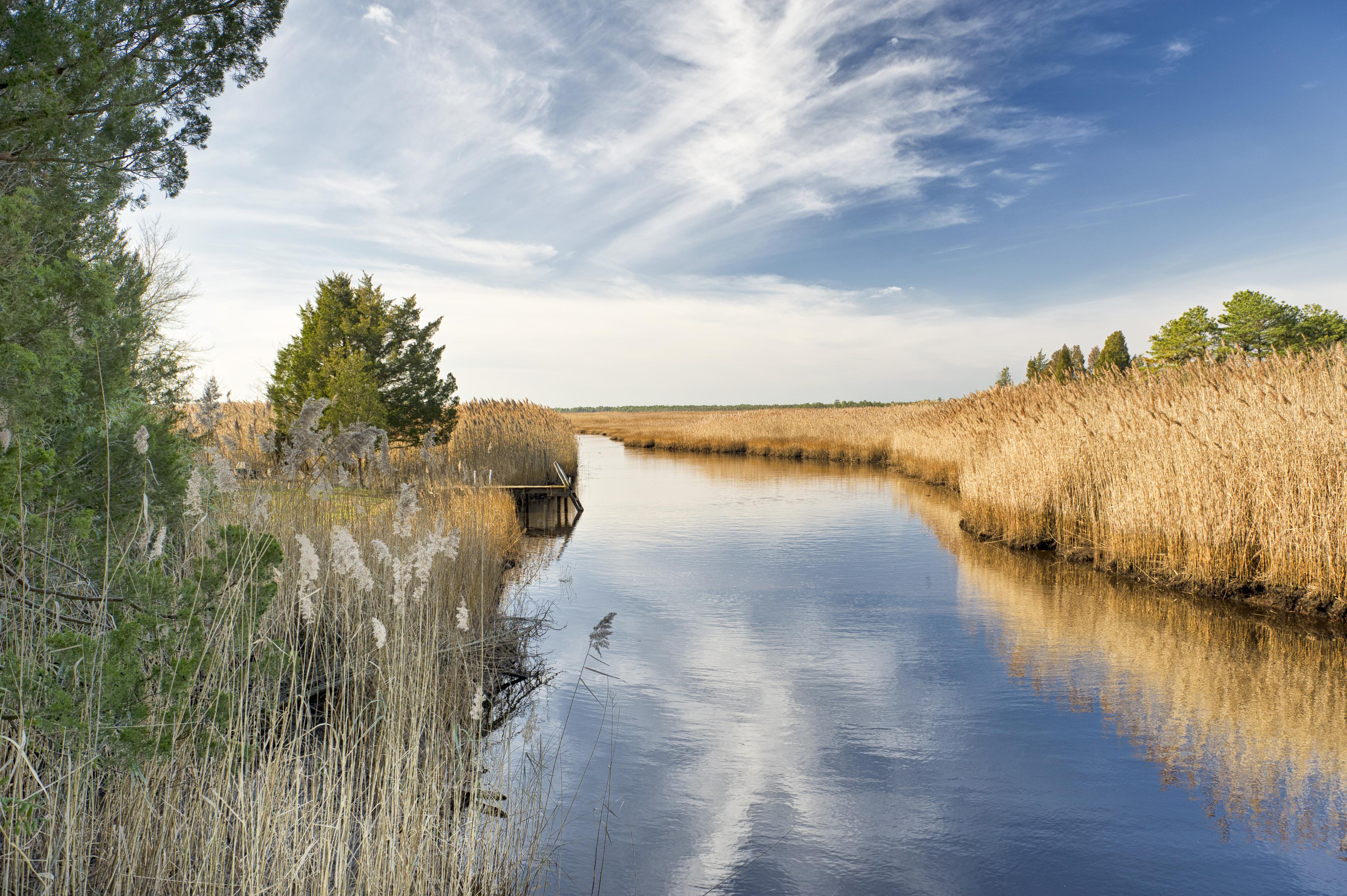 water_NJ_Pinelands_Small_Stream_Wetlands_450x299.jpg